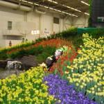 Tulpaner, påskliljor och krokusar