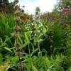 Abriachan trädgård ovanför Loch Ness