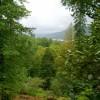 Ardkinglas skogsträdgård med Storbritanniens högsta träd i bakgunden till höger