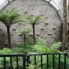 Dicksonia på Benmore botaniska trädgård