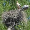 En stork välkomnar oss till Türi